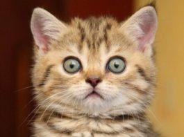 Реакция кота на храп хозяина