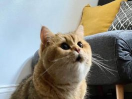 Девушка рассыпала сухой корм, ей удалось запечатлеть реакцию своего кота