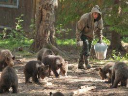 Семья спасла больше 200 медвежат за 20 лет