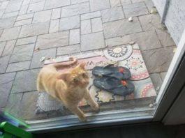 Был суровым котом, а теперь стал заботливым папашей